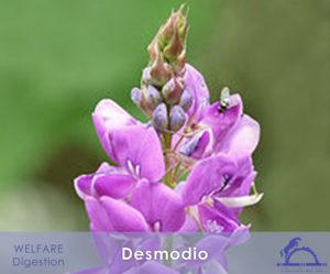 Desmodio_iCavallidelSole__