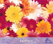 EquiFlora_iCavallidelSole_