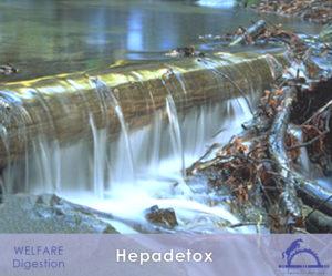 Hepadetox_iCavallidelSole_