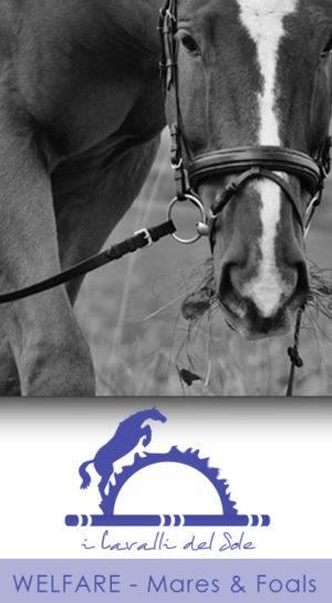 1-8 WELFARE - Mares & Foals/Fattrici&Puledri