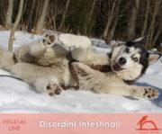 DISORDINI-INTESTINALI_iCavalliDelSole_