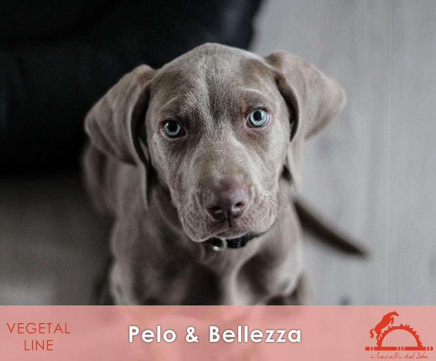PELOeBELLEZZA_iCavalliDelSole_