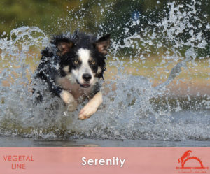 SERENITY_iCavalliDelSole_