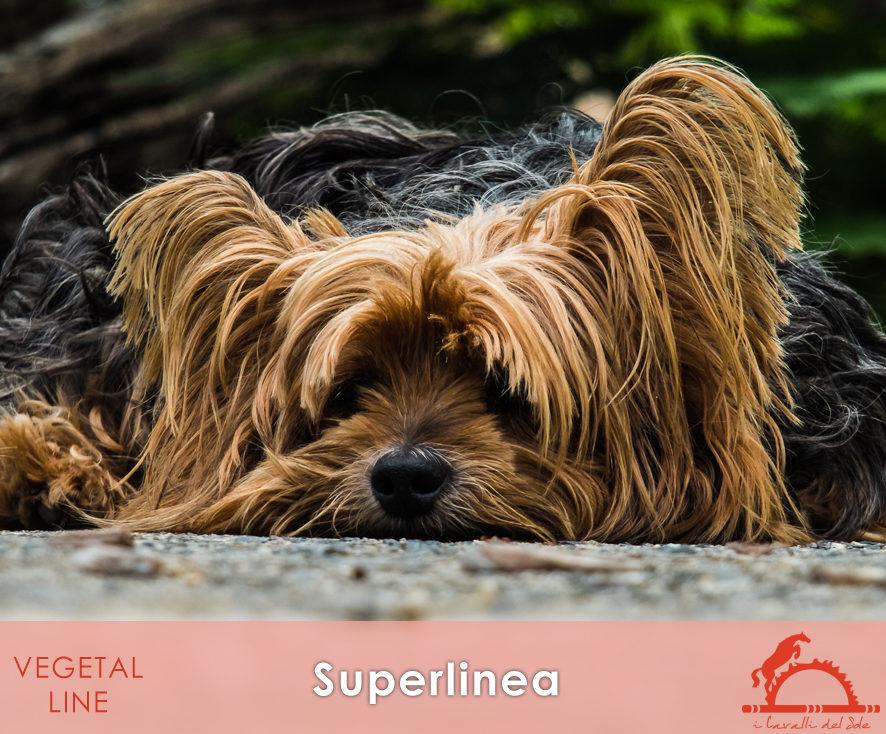 SUPERLINEA_iCavalliDelSole_