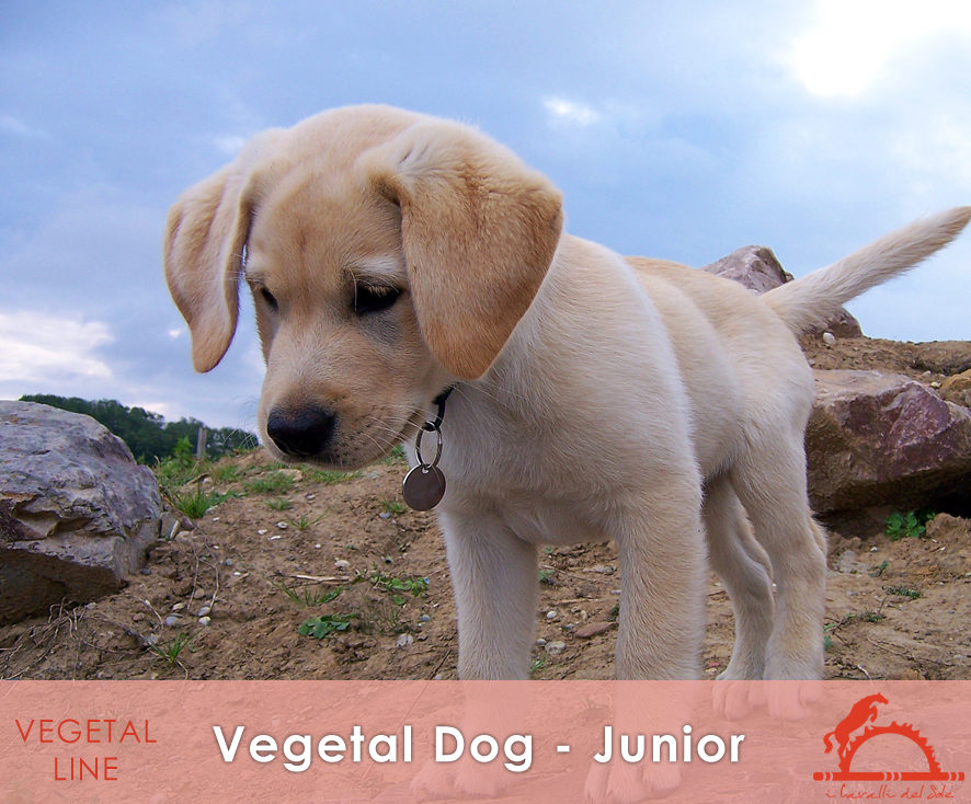 VEGETAL-DOG-JUNIOR_iCavalliDelSole_