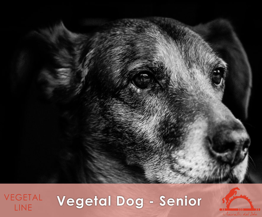 VEGETAL-DOG-SENIOR_iCavalliDelSole_