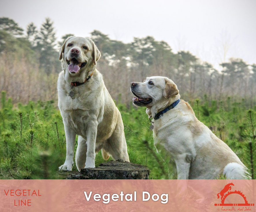 VEGETAL-DOG_iCavalliDelSole_
