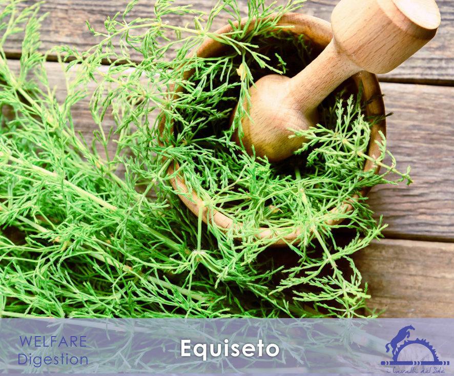 1-1-Y_Equiseto_1_iCavallidelSole_