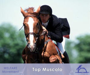 Top Muscolo_iCavallidelSole_