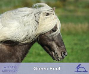 Green Hoof_iCavallidelSole_