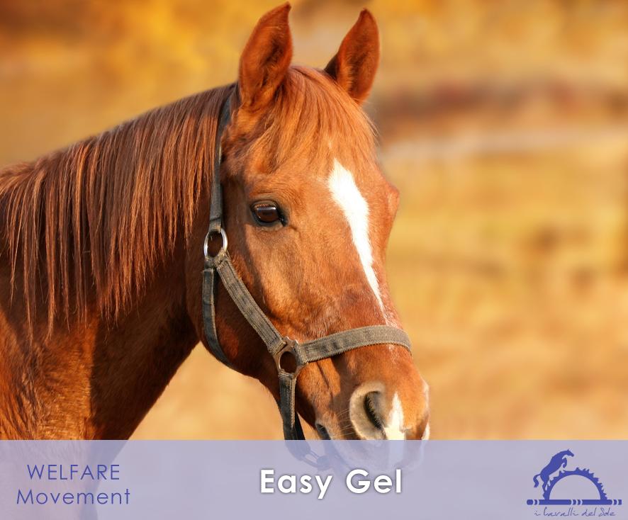 EasyGel_iCavallidelSole_