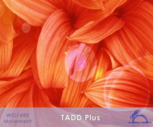 TADDplus_iCavallidelSole_