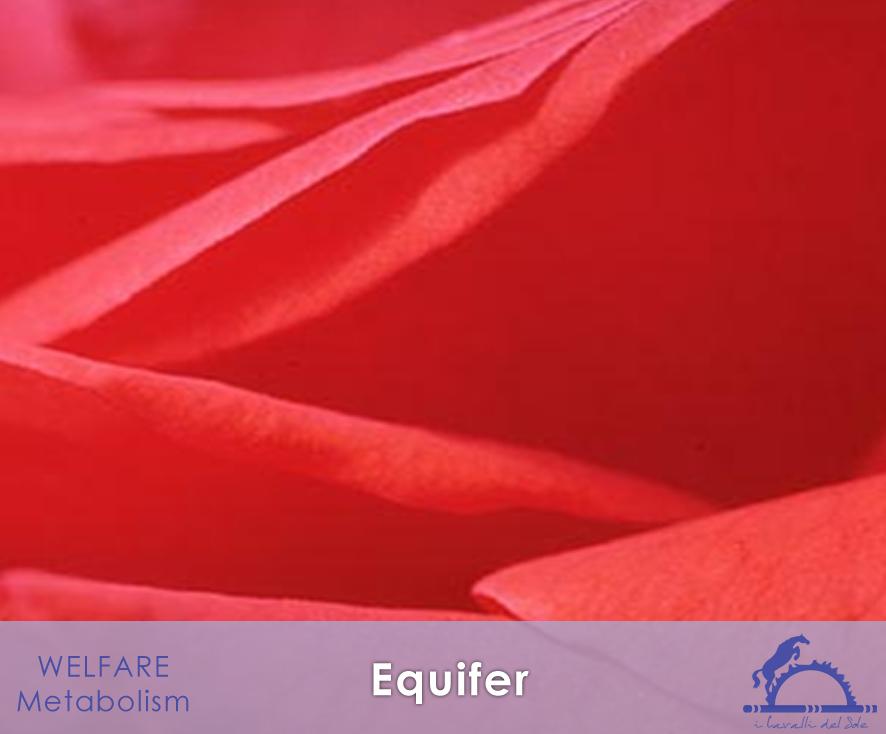 Equifer_iCavallidelSole_