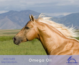 OmegaOil_iCavallidelSole_