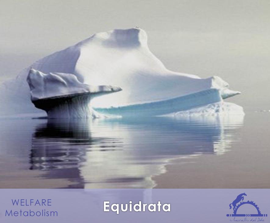 Equidrata_iCavallidelSole_