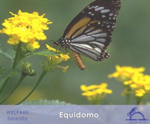 Equidomo_iCavallidelSole_