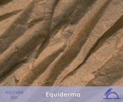 Equiderma_iCavallidelSole_