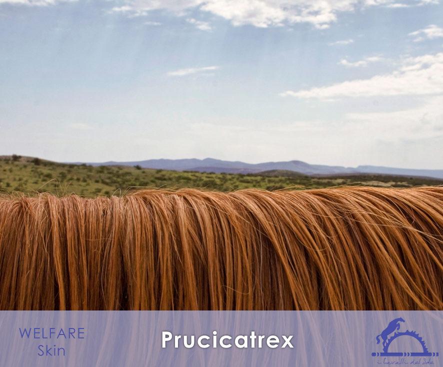 Prucicatrex_iCavallidelSole_