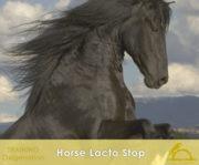 2-1-X_HorseLactoStop_1_iCavallidelSole_