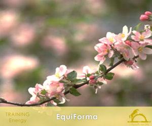 EquiForma_iCavallidelSole_
