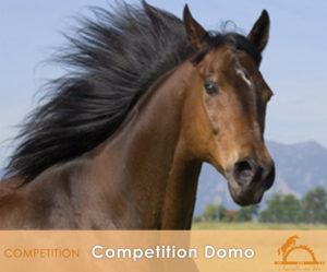 CompetitionDomo_iCavallidelSole_