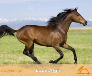 EquinAlgin_iCavallidelSole_