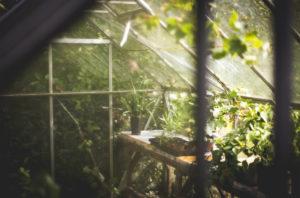 Botanica_icavallidelsole